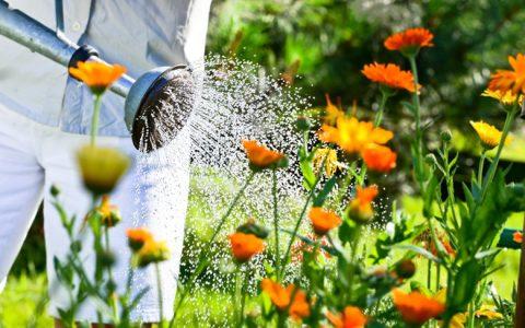 Im Sommer Pflanzen richtig giessen
