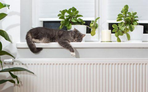 Günstiger TWL-Wartungsservice für wohlige Wärme