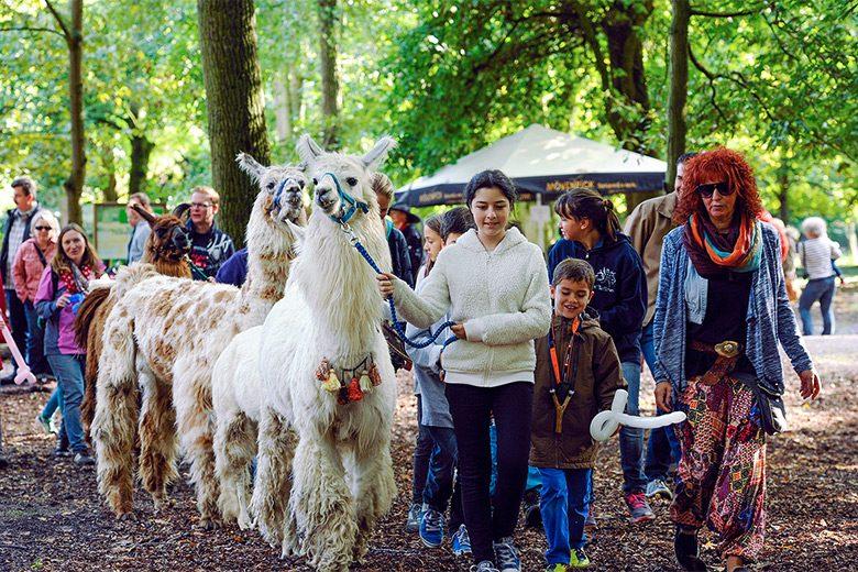 Der Wildpark Ludwigshafen lohnt einen Herbstausflug