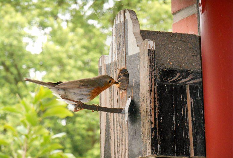 Nistkästen bieten Vögeln ein Zuhause