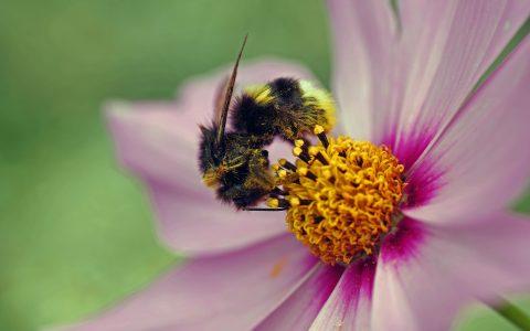 Ludwigshafen summt und brummt gegen das Insektensterben