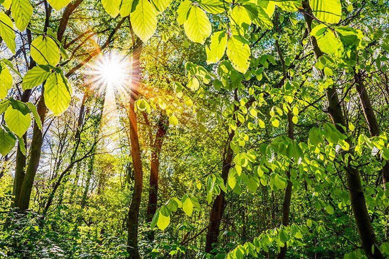 Der große CO2-Speicher Wald schützt das Klima