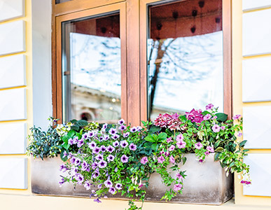Blütenmeer vorm Fenster