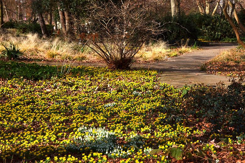 Frühlingserwachen im Ebertpark