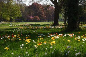 Tulpenblüte im Ebertpark Ludwigshafen.